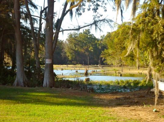 Sheffiled Mill Pond 2
