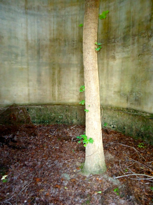 Silo-Tree Growing Inside 2