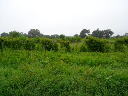 Phipps Cemetery, Newton, Baker County