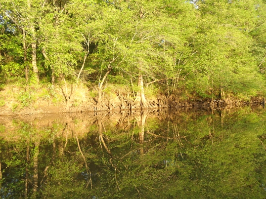 Ichauway Nochaway Creek, Dewsville, Baker County