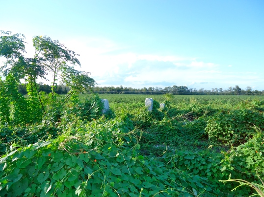 Smith Cemetery, Crestview, Baker County