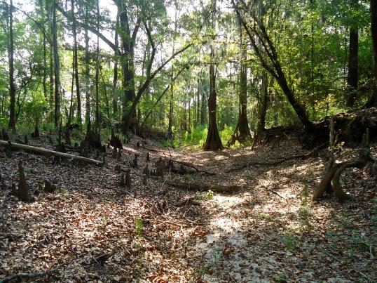 Wildcat Spring, Hard-Up, Baker County