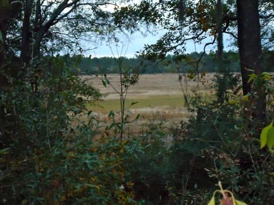 Wolf Pond, Elmodel, Baker County