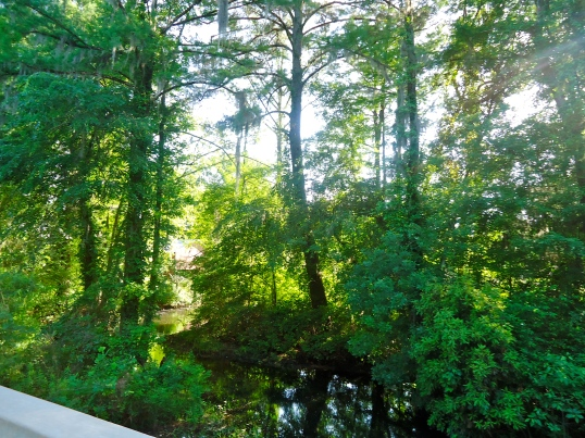 Ichauway-Notchaway Creek, Ivys Mill, Baker County