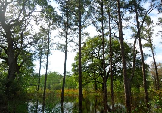 Duck Pond, Elmodel, Baker County