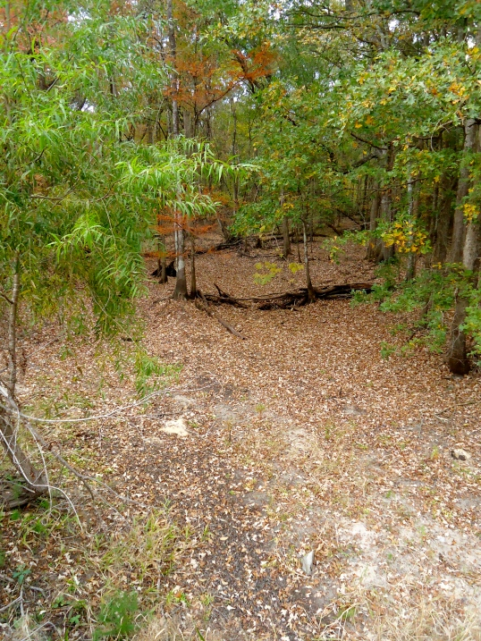 Aligator Creek 1