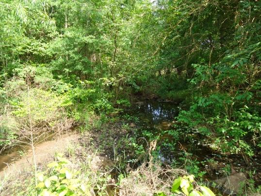 Neals Creek