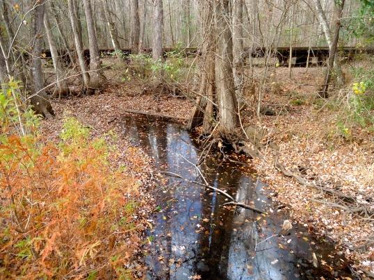 Dry Branch Stream