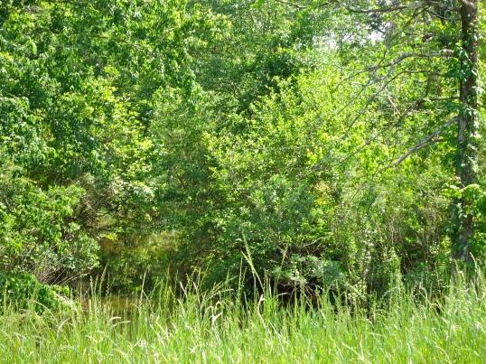 Mosh Branch Stream