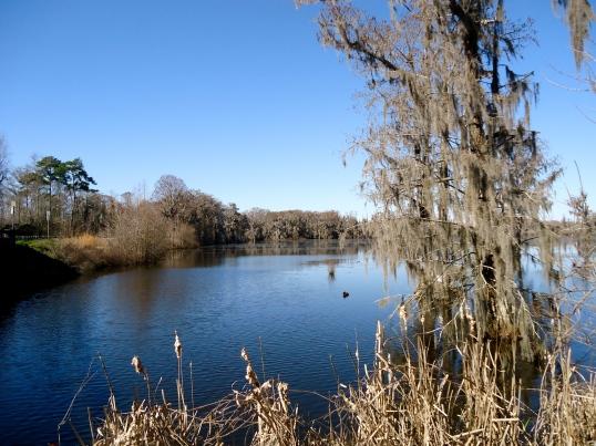 Codray's Pond Close-Up